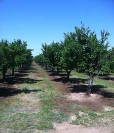 May Prune Crop